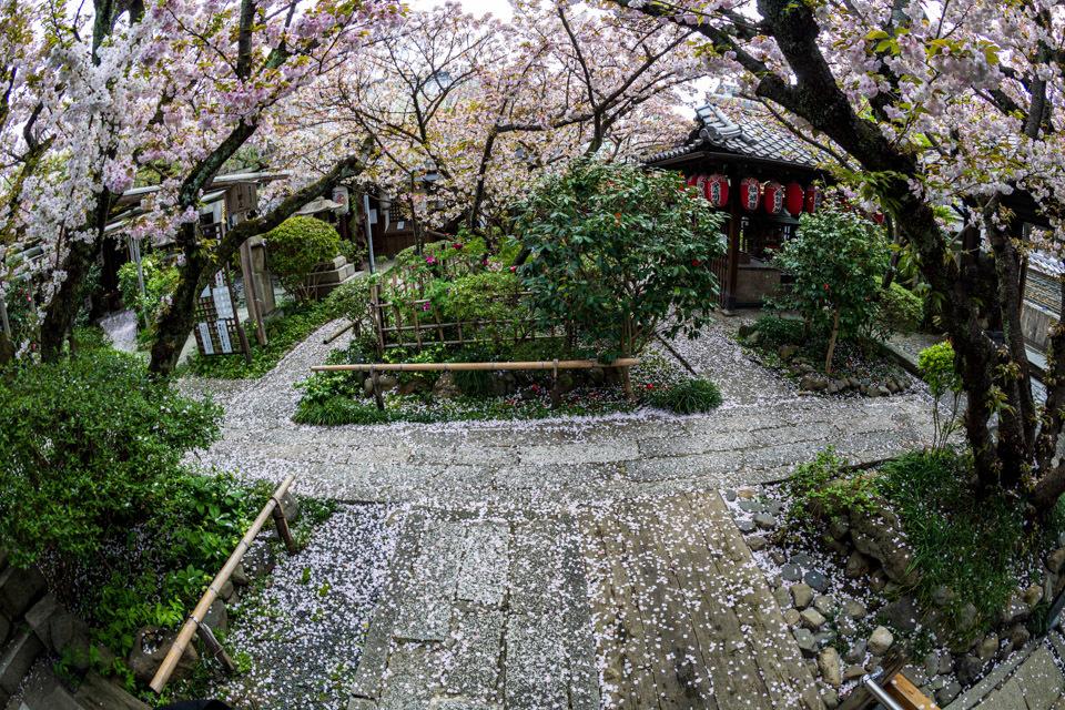 桜 2021 雨宝院! _b0128581_19090969.jpg