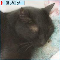 猫セラピー_a0389088_17184918.jpg