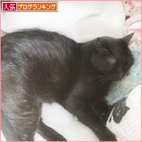 猫セラピー_a0389088_17184930.jpg