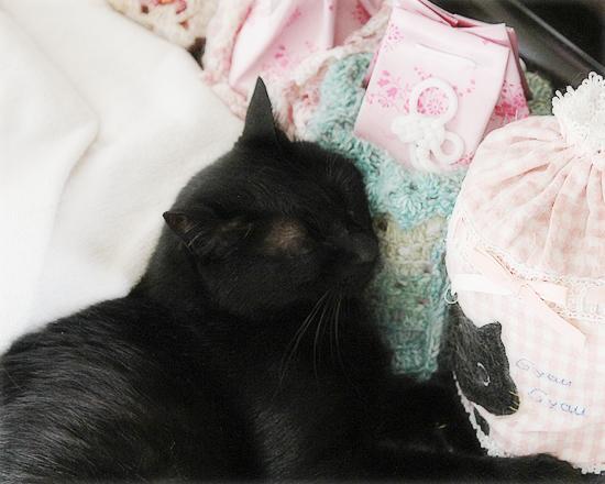 猫セラピー_a0389088_17184956.jpg