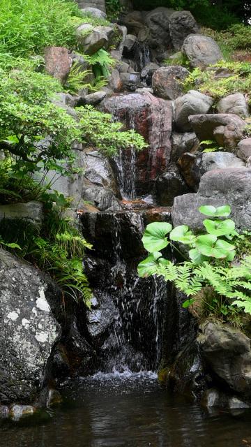 殿ヶ谷戸庭園_c0047919_14565634.jpg