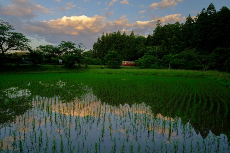 緑と水の香り FUJIFILM X Series facebookより転載_f0050534_22405046.jpg