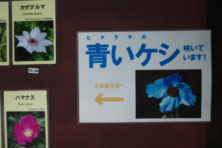 箱根町仙石原をぶらぶら その1 ~ 箱根湿生花園_a0287336_17352778.jpg