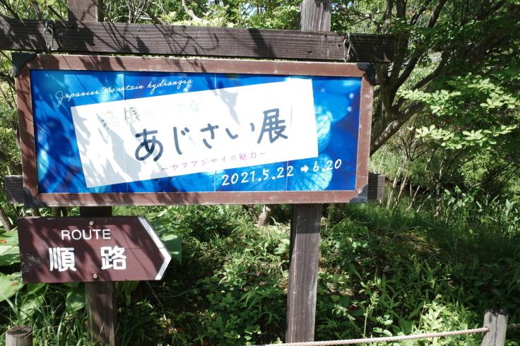 箱根町仙石原をぶらぶら その1 ~ 箱根湿生花園_a0287336_17431754.jpg