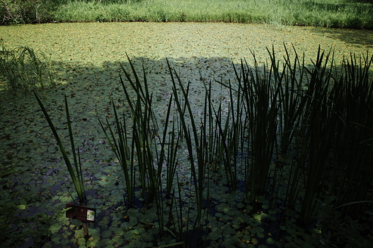 箱根町仙石原をぶらぶら その1 ~ 箱根湿生花園_a0287336_17455208.jpg