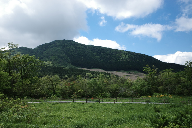 箱根町仙石原をぶらぶら その1 ~ 箱根湿生花園_a0287336_17462224.jpg