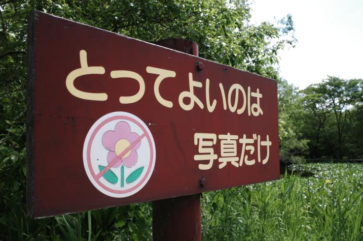 箱根町仙石原をぶらぶら その1 ~ 箱根湿生花園_a0287336_17470047.jpg