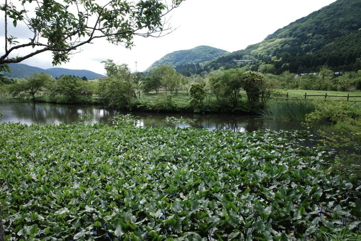 箱根町仙石原をぶらぶら その1 ~ 箱根湿生花園_a0287336_17484375.jpg