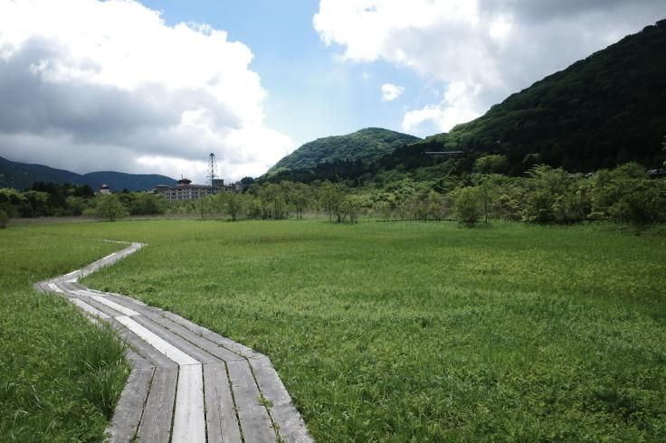 箱根町仙石原をぶらぶら その1 ~ 箱根湿生花園_a0287336_17502628.jpg