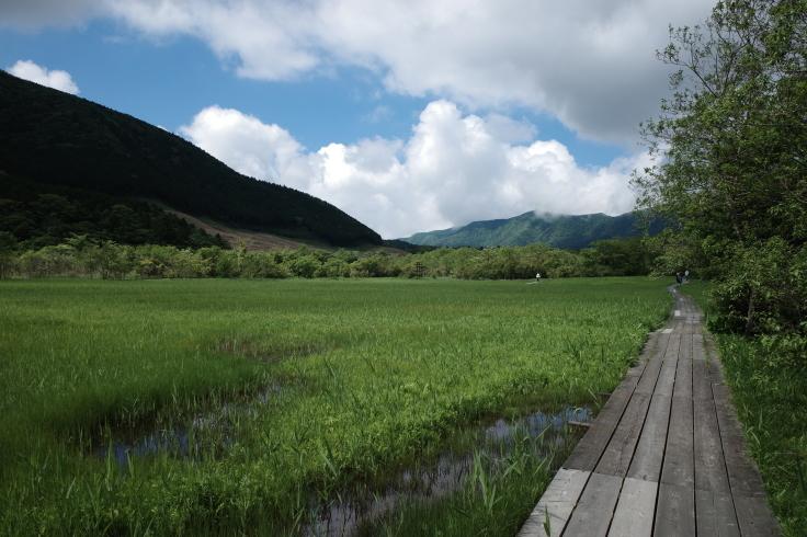 箱根町仙石原をぶらぶら その1 ~ 箱根湿生花園_a0287336_17504639.jpg