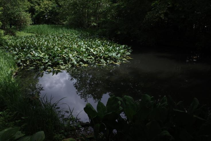 箱根町仙石原をぶらぶら その1 ~ 箱根湿生花園_a0287336_17515113.jpg