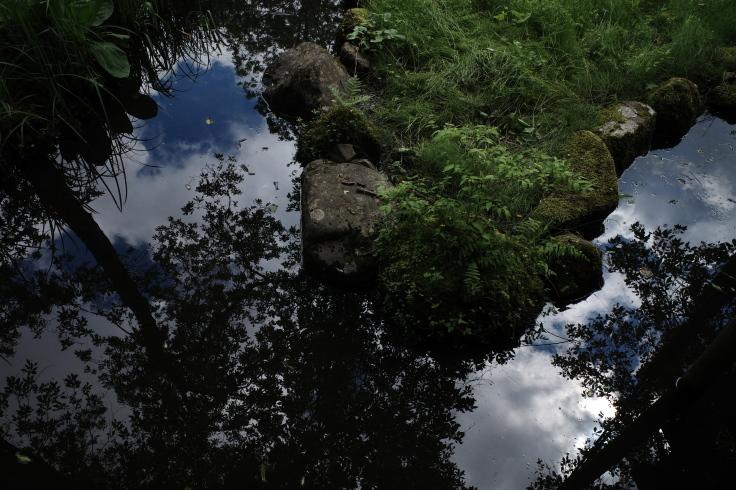 箱根町仙石原をぶらぶら その1 ~ 箱根湿生花園_a0287336_17522362.jpg