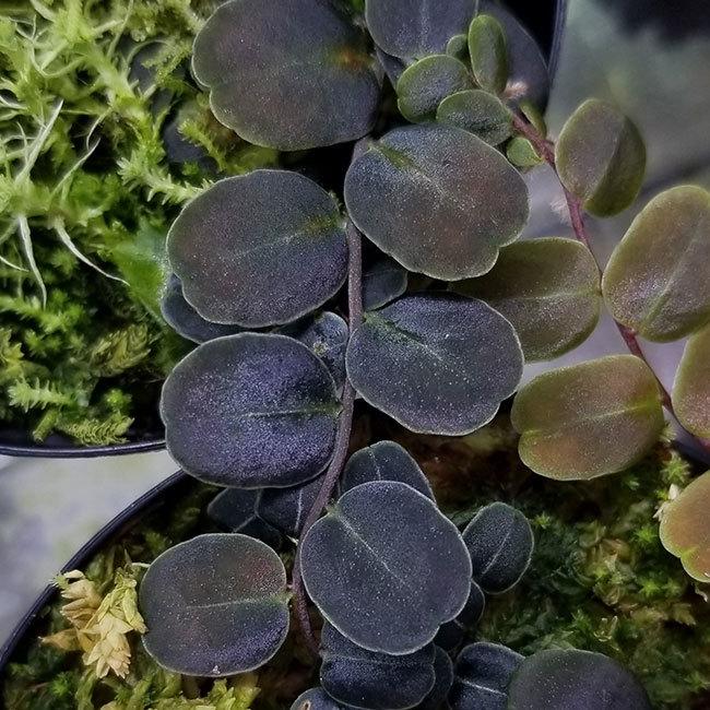 新掲載植物たちをさら~っとご紹介!!_d0376039_17495198.jpg