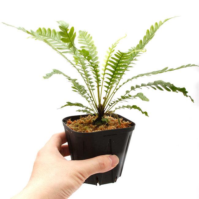 新掲載植物たちをさら~っとご紹介!!_d0376039_17544669.jpg