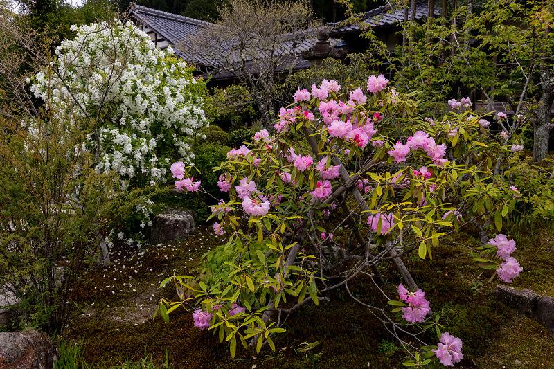春の花咲く実光院_f0155048_23093552.jpg