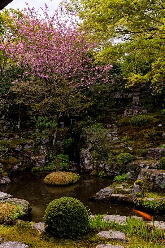 春の花咲く実光院_f0155048_23100698.jpg