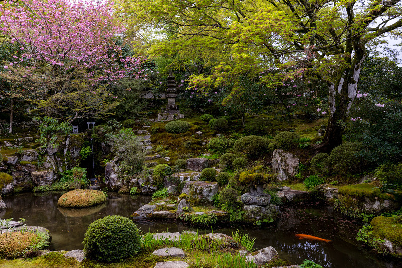 春の花咲く実光院_f0155048_23101384.jpg