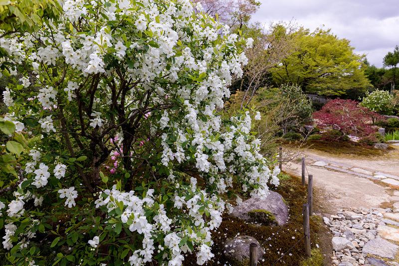 春の花咲く実光院_f0155048_23102149.jpg