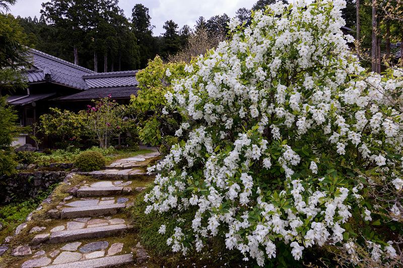 春の花咲く実光院_f0155048_23103847.jpg