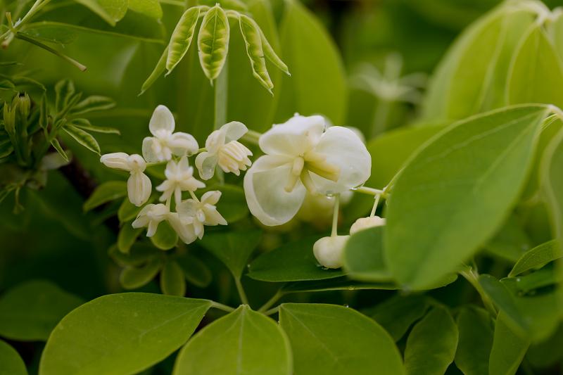 春の花咲く実光院_f0155048_23105809.jpg