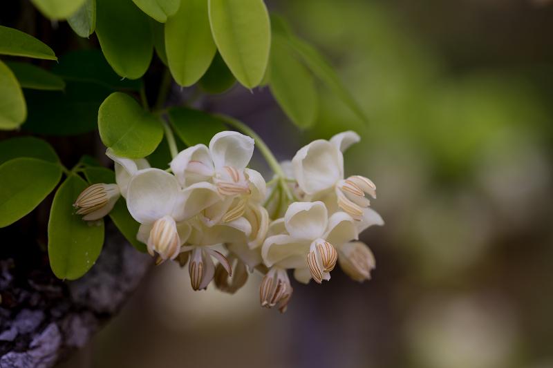 春の花咲く実光院_f0155048_23110706.jpg