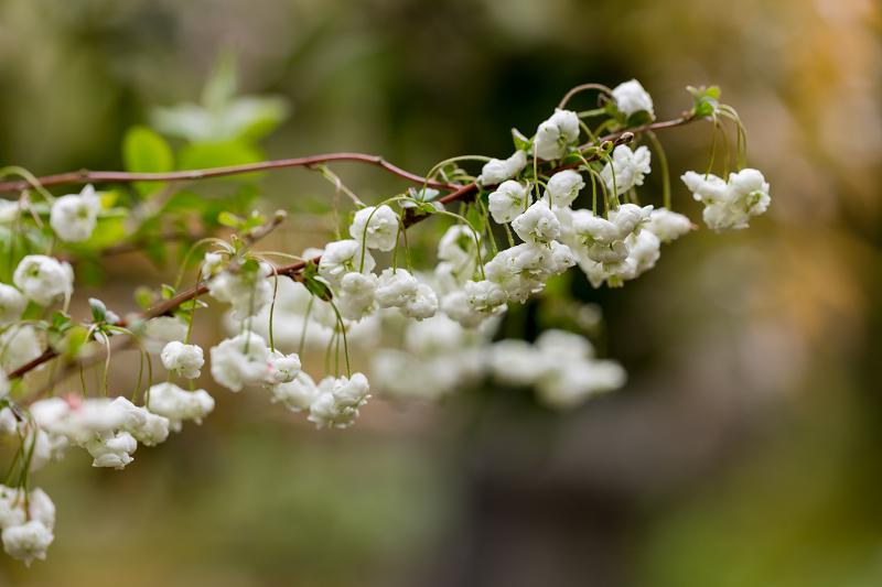 春の花咲く実光院_f0155048_23114496.jpg