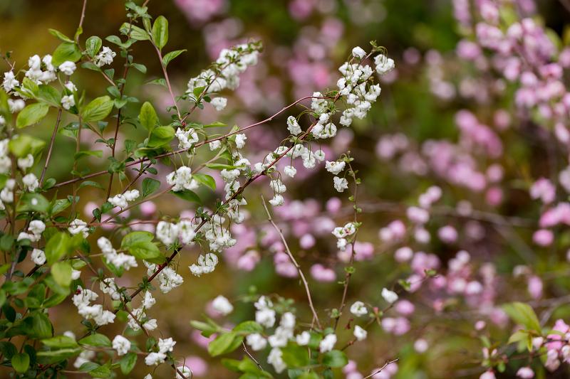 春の花咲く実光院_f0155048_23120083.jpg