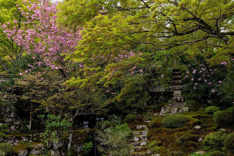 春の花咲く実光院_f0155048_23122147.jpg