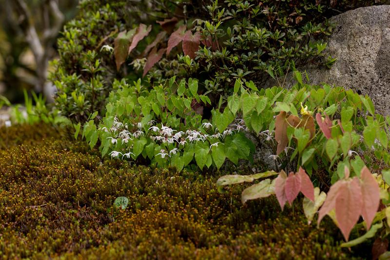 春の花咲く実光院_f0155048_23124116.jpg