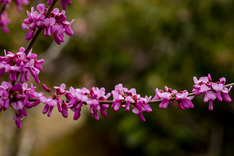 春の花咲く実光院_f0155048_23130342.jpg