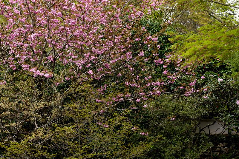 春の花咲く実光院_f0155048_23133815.jpg