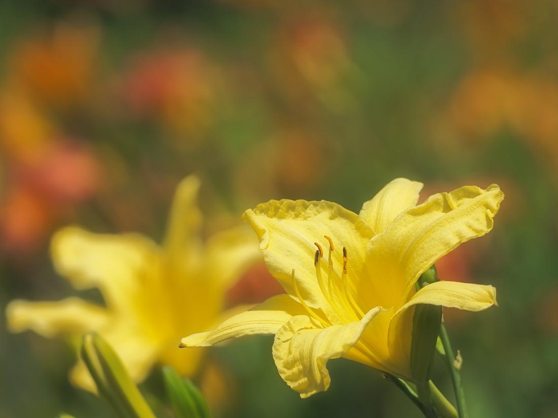 公園に咲く花   奈良県_d0286954_04462233.jpg