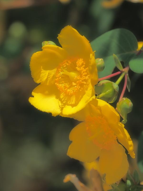 公園に咲く花   奈良県_d0286954_04463000.jpg