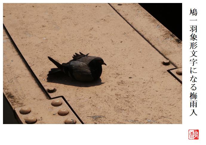 鳩一羽象形文字になる梅雨入_a0248481_22043098.jpg