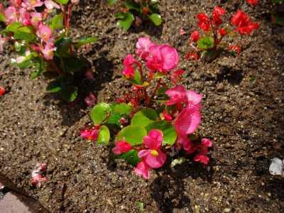 ガーデンふ頭総合案内所前花壇の植替えR3.6.14_d0338682_10141781.jpg