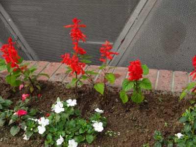 ガーデンふ頭総合案内所前花壇の植替えR3.6.14_d0338682_10143919.jpg