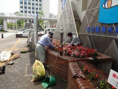 ガーデンふ頭総合案内所前花壇の植替えR3.6.14_d0338682_10160457.jpg