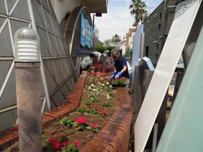 ガーデンふ頭総合案内所前花壇の植替えR3.6.14_d0338682_10161523.jpg