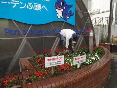 ガーデンふ頭総合案内所前花壇の植替えR3.6.14_d0338682_10163483.jpg