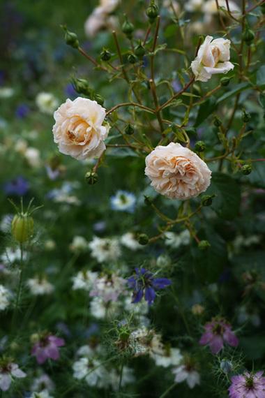 お花と体のメインテナンスと。_e0209997_09500236.jpg