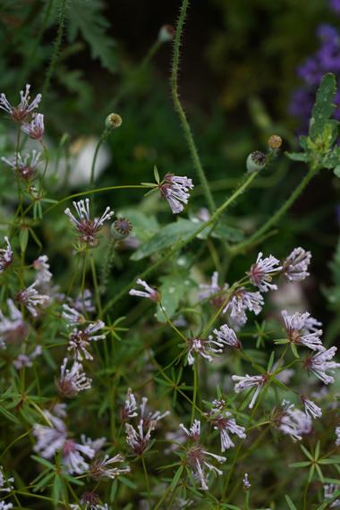 お花と体のメインテナンスと。_e0209997_09512263.jpg