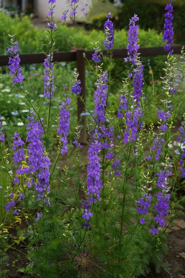 お花と体のメインテナンスと。_e0209997_18085401.jpg