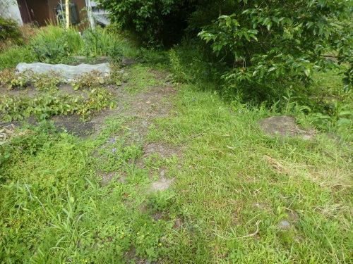 草刈り_c0108198_15034701.jpg