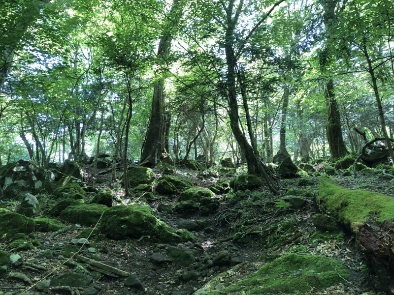 ミヤマキリシマの咲く平治岳へ_d0116009_01264623.jpg