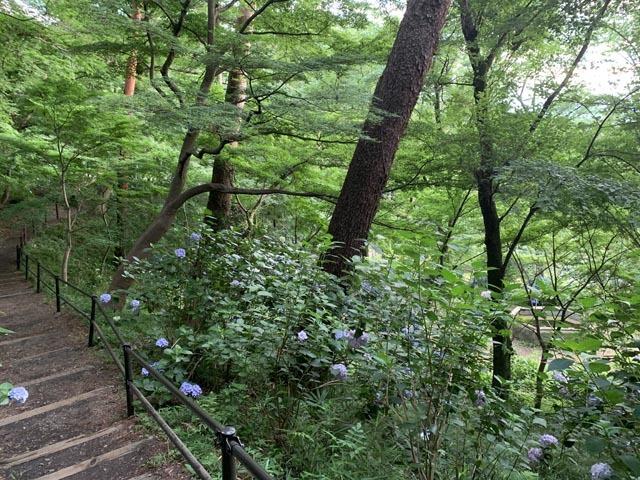 高幡不動尊境内散策コースから、かたらいの路多摩丘陵コースへ。_e0133780_21462513.jpg