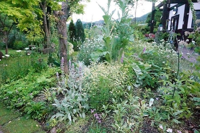 庭の景色あれこれ_e0365880_22023598.jpg