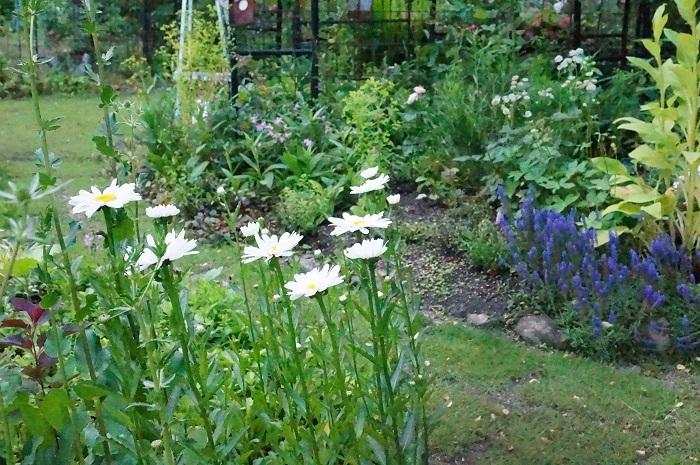 庭の景色あれこれ_e0365880_22024363.jpg