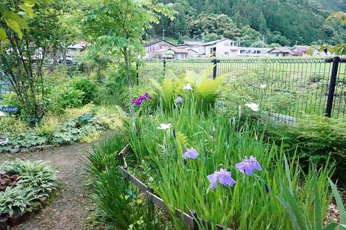 庭の景色あれこれ_e0365880_22031609.jpg