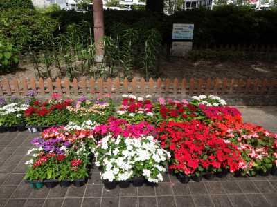 大手銀杏の会さんに花鉢の販売を行いました!R3.6.2_d0338682_10241386.jpg