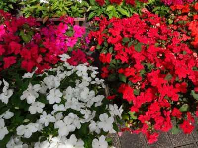 大手銀杏の会さんに花鉢の販売を行いました!R3.6.2_d0338682_10261025.jpg